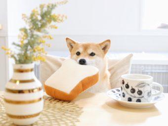 柴犬カフェ
