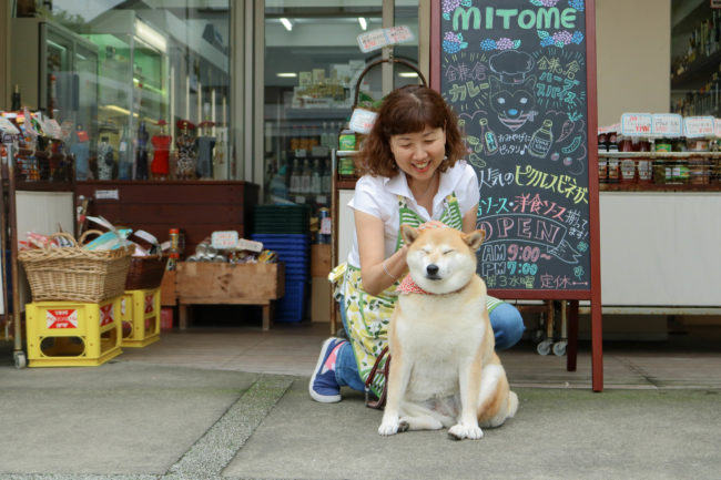 柴犬,三留商店,看板犬,鎌倉