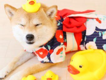 柴犬マンガ