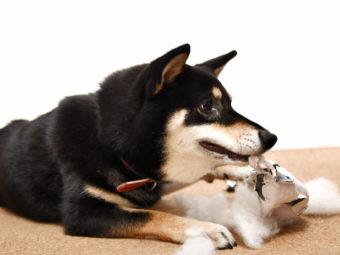柴犬掃除機