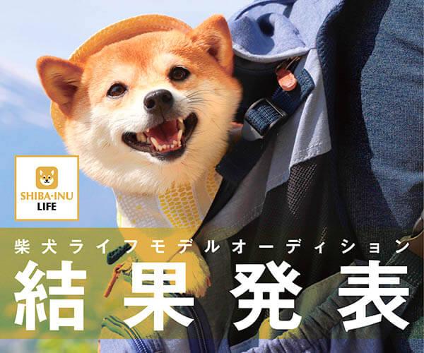 柴犬モデル