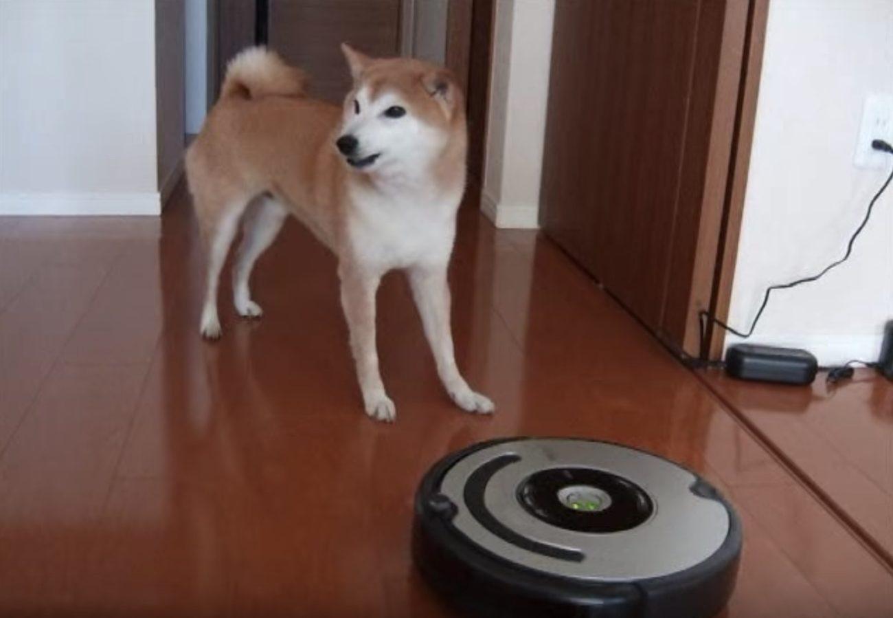 柴犬お掃除ロボット