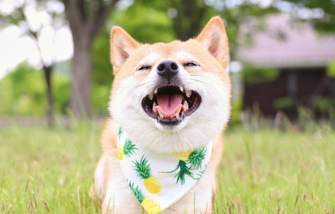 柴犬キーボード