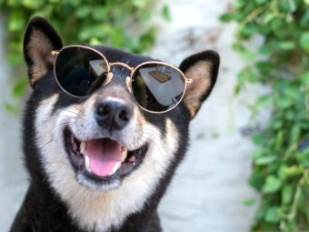 柴犬,紫外線