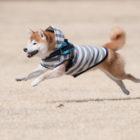 ありそうでなかった柴犬専用のドッグラン発見!