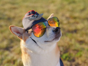 柴犬ハロウィン