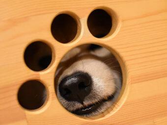 柴犬,かくれんぼ