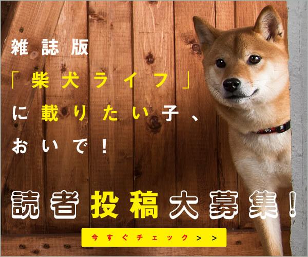 雑誌柴犬ライフ,読者投稿