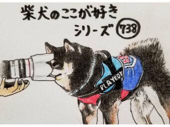 柴犬,ハッシュタグ,イラスト