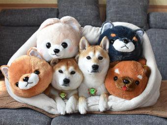 柴犬,柴犬グッズ