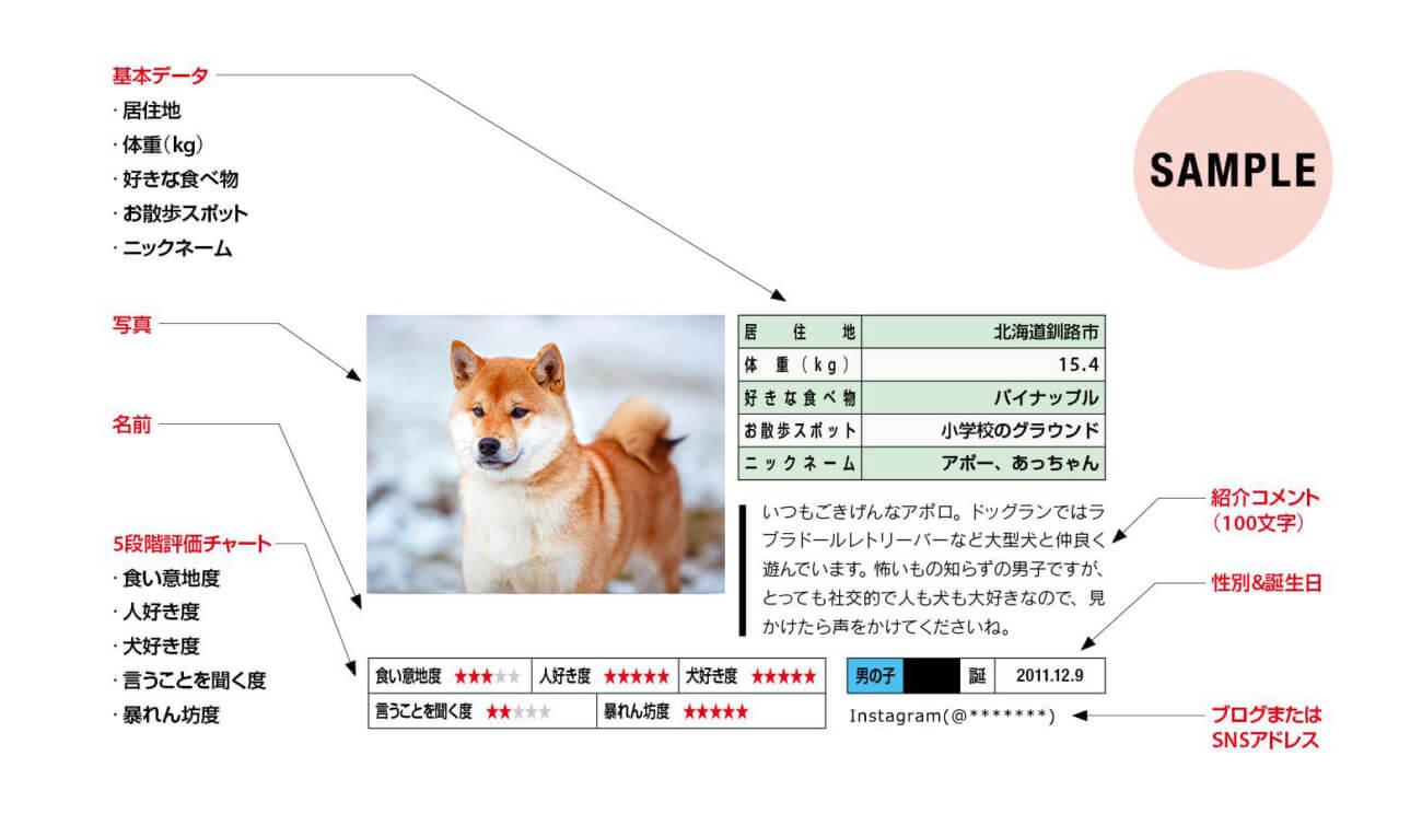 柴犬アンケート