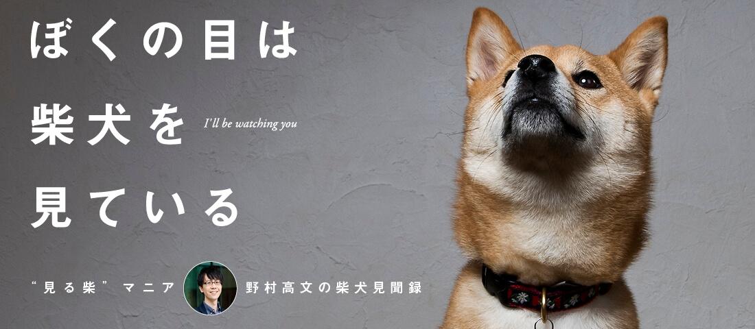 """""""見る柴""""マニア 野村高文の柴犬見聞録"""