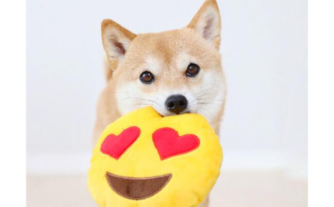 柴犬,可愛い