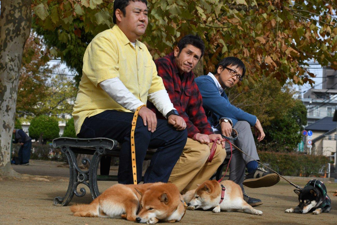 柴犬,柴公園