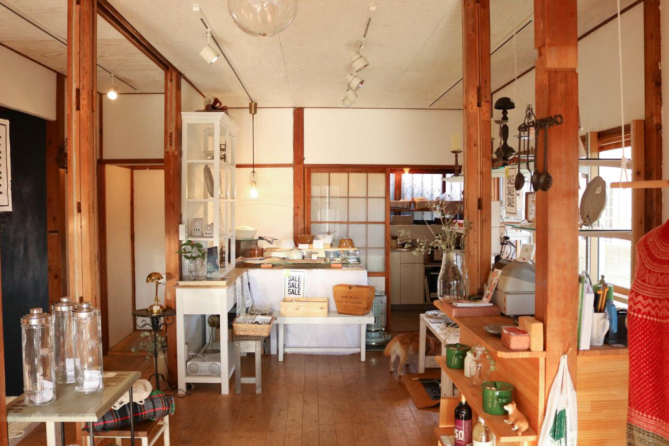 柴犬,カフェ,大磯,サラ