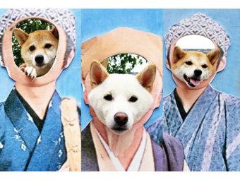 柴犬,顔ハメパネル