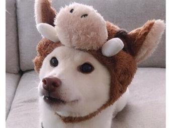 柴犬,年賀状