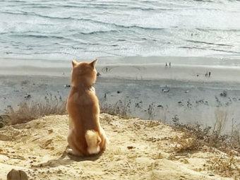 柴犬,自然