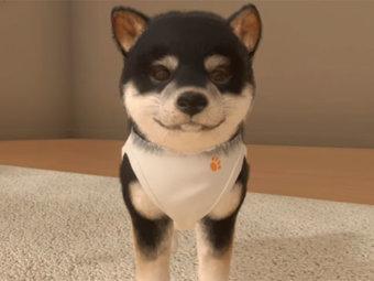柴犬,ゲーム