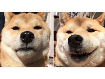 柴犬,ハッシュタグ
