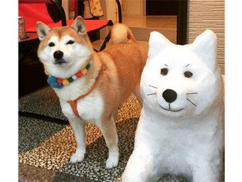 柴犬,雪だるま
