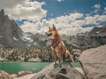 柴犬,海外絶景