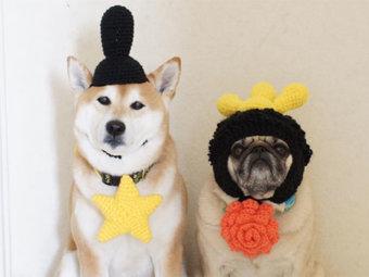 柴犬,ひな祭り