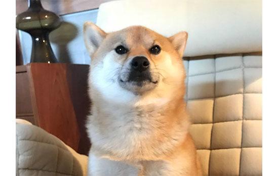 柴犬,エクササイズ
