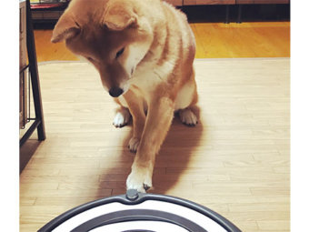 柴犬,お掃除ロボ