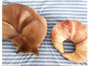 柴犬,パン