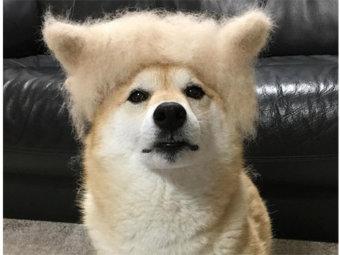 柴犬,抜け毛アート