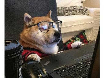 柴犬,パソコン