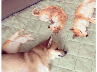 柴犬,柴犬アイテム