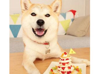 柴犬,ケーキ