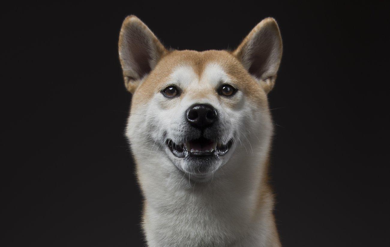 柴犬,オトクル