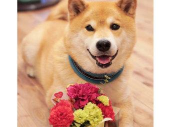 柴犬,母の日