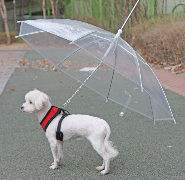 犬用傘付きリード PUPPIA パピア