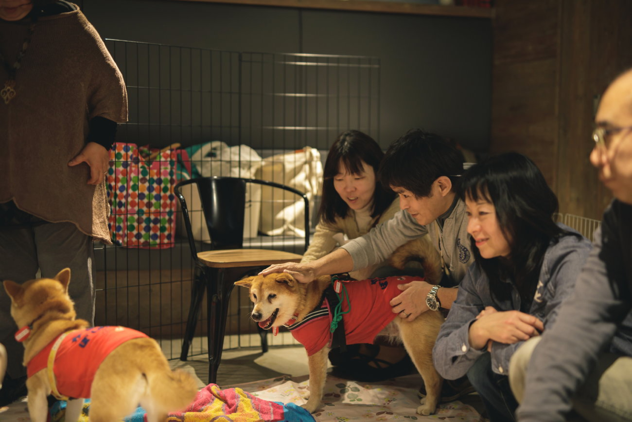 柴犬,保護犬,里親,譲渡会