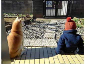 柴犬,柴距離