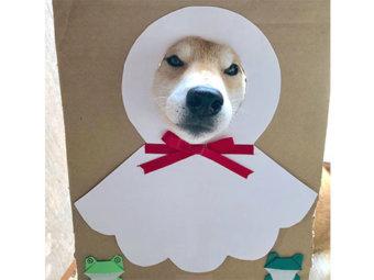 柴犬,イジリ