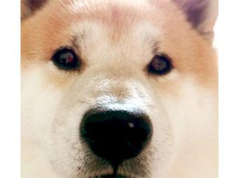柴犬,文句