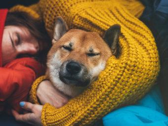 柴犬,台風