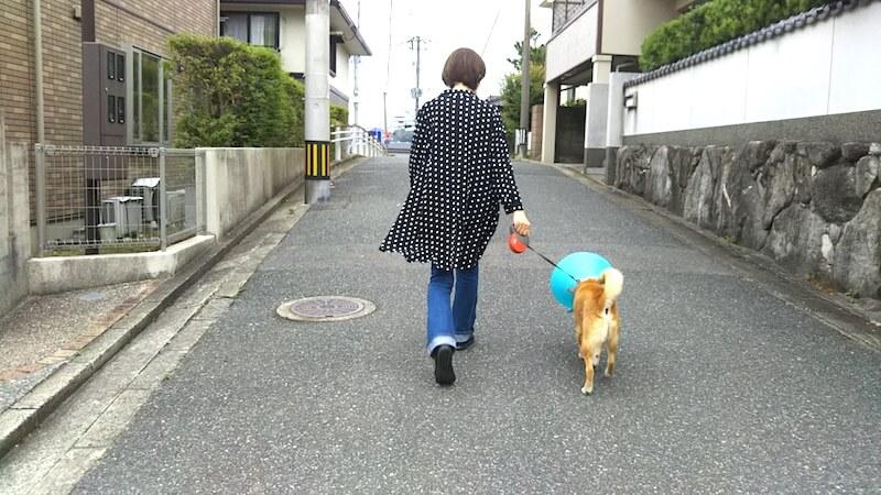 柴犬ミシェル