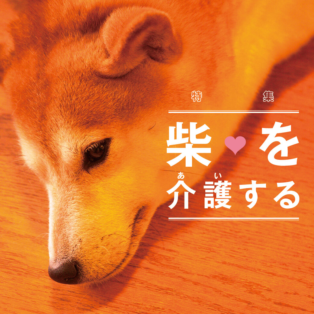 柴犬,介護