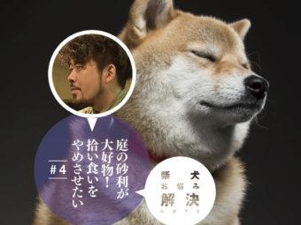 柴犬お悩み