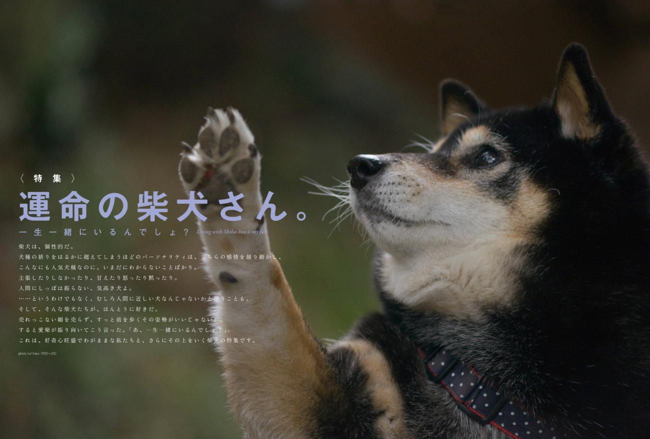 雑誌版,柴犬ライフ