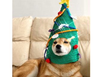 柴犬,クリスマス