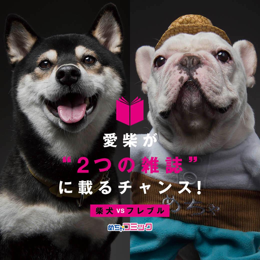 柴犬,めちゃコミック