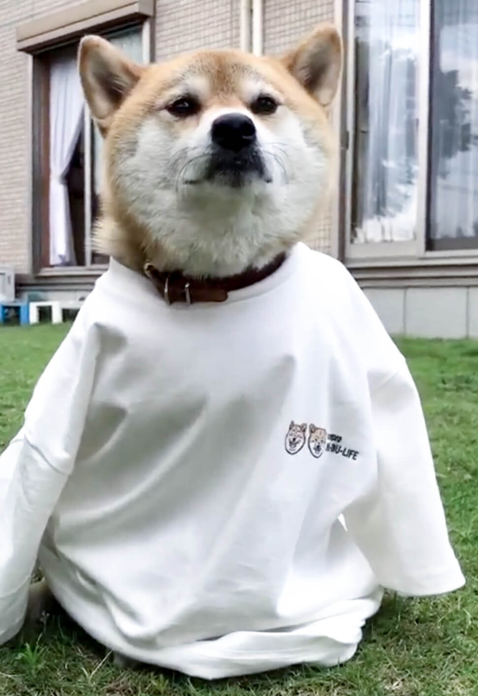 柴犬,Tシャツ,カスタムオーダー