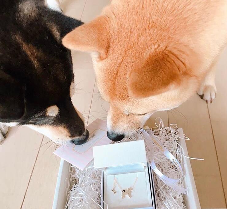柴犬,アクセサリー,アニマーレ